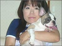 フレンチブルドッグフォーンパイド子犬