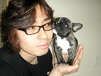 フレンチブルドッグクリーム子犬